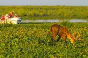 REVISTA NATIONAL GEOGRAPHIC: Seleccionan a Esteros del Iberá como destino mundial para 2015